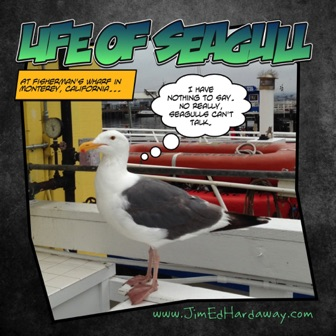 Life of Seagull